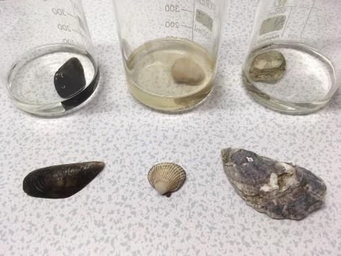 shells and jars